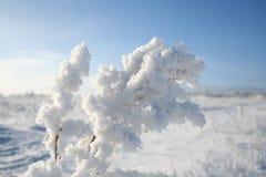 Verzweigen Sie sich in Schnee Lizenzfreie Stockfotos