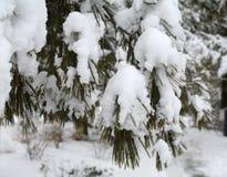 Verzweigt sich das afer schwere Schneefälle Stockfotos