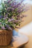 Verzweigt sich Lavendel Stockfoto