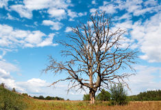 Verzweigter toter Baum gegen einen malerischen bewölkten Himmel Lizenzfreies Stockfoto