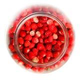 Vesca de Fragaria, fraise de régfion boisée Image libre de droits