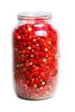 Vesca de Fragaria, fraise de régfion boisée Photographie stock libre de droits