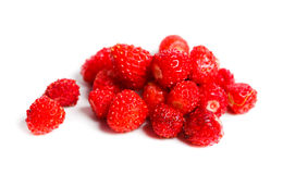 Vesca de Fragaria, fraise de régfion boisée Photos stock