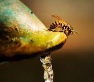 vespa Imagens de Stock