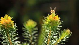 vespa Imagem de Stock
