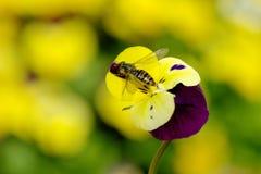 vespa Imagens de Stock Royalty Free