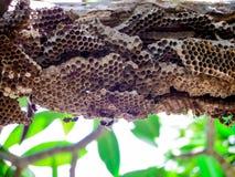 vespa del lavoratore sotto l'albero di pumeria Immagini Stock