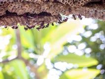 vespa del lavoratore sotto l'albero di pumeria Immagine Stock