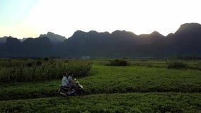 Vespa del paseo de la muchacha y del individuo por los campos en la vista de pájaro de la puesta del sol almacen de video