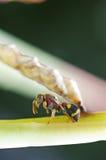 vespa di carta fotografia stock