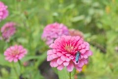 Vespa ed il fiore Fotografia Stock