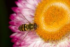 Vespa gialla sui fiori Fotografia Stock Libera da Diritti