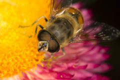 Vespa gialla sui fiori Fotografia Stock