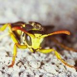 Vespa - vespa di carta Immagini Stock Libere da Diritti