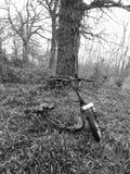 Vespa vieja en el bosque Fotografía de archivo