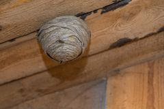 Vespas e seu ninho da vespa imagem de stock