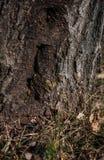 Vespas selvagens que vivem na árvore oca fotos de stock