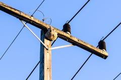 Vespe nel nido Fotografia Stock Libera da Diritti
