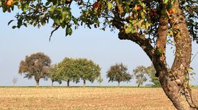 Vespertine agriculture scenery Stock Images
