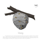 Vespiary drawing. Wasp hive on a branch. Residence flying insect. S. Vector illustration Royalty Free Stock Photos
