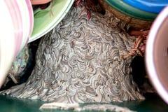 Vespiary i en ask med blomkrukor, assimilation i mänskligt rum arkivfoton
