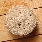 Vespiary at wood ceiling Royalty Free Stock Images