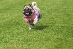 Vestido corriente del dirndl del perro del barro amasado Fotografía de archivo libre de regalías