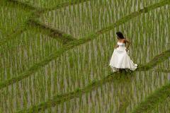 Vestido nupcial branco com a jovem mulher romântica bonita em campo de almofada terraced Imagens de Stock