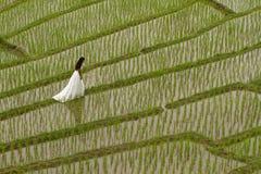 Vestido nupcial branco com a jovem mulher romântica bonita em campo de almofada terraced Imagens de Stock Royalty Free
