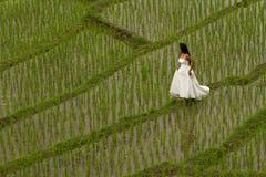 Vestido nupcial branco com a jovem mulher romântica bonita em campo de almofada terraced Imagem de Stock
