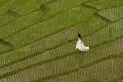 Vestido nupcial branco com a jovem mulher romântica bonita em campo de almofada terraced Foto de Stock