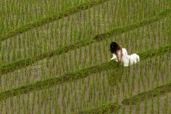 Vestido nupcial branco com a jovem mulher romântica bonita em campo de almofada terraced Imagem de Stock Royalty Free
