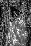 Vestido nupcial branco com a jovem mulher romântica bonita no campo do cana-de-açúcar Imagem de Stock Royalty Free