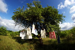 Vestiti che appendono sull'albero Immagine Stock