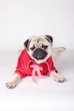 Vestito elegante dal cane fotografie stock libere da diritti
