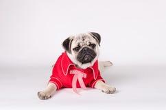 Vestito elegante dal cane immagine stock