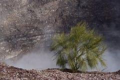 Vesuvius. Bushes at the edge of Vesuvius (Italian volcano stock image