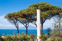 Vesuvius, Naples. View of Vesuvius behind some trees, Naples Royalty Free Stock Photography