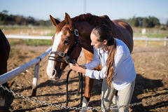 Vet adjusting horse bridle at barn during sunny day Royalty Free Stock Images