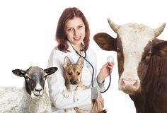 Vet and animals. On a white background stock image