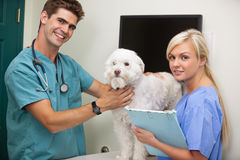 Vet with assistant examining dog Royalty Free Stock Images