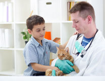 Vet calms a little cat and ready for review Royalty Free Stock Image