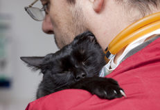 Vet caressing cute black cat Royalty Free Stock Photos