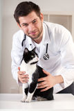 Vet with cat. Portrait of a handsome vet with cat Stock Photography