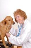 Vet checking dog Stock Images