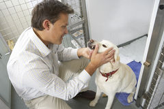Vet Checking Dog In Pen. Checking teeth Royalty Free Stock Images
