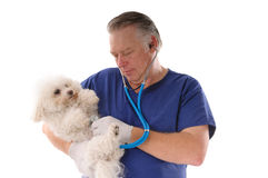 Vet checking dog Stock Photo