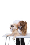 Vet checking a dogs teeth Stock Photo