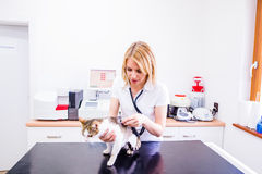 Vet checking a little sick cat with a stethoscope Royalty Free Stock Photos