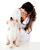 Vet checking a puppy Stock Photo